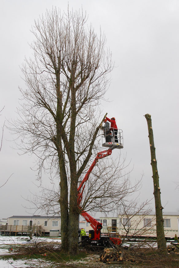 conservation_company_tree_surgery_natural_ponds_east_anglia_027