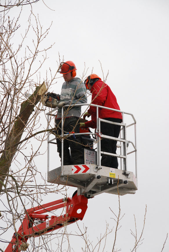 conservation_company_tree_surgery_natural_ponds_east_anglia_028