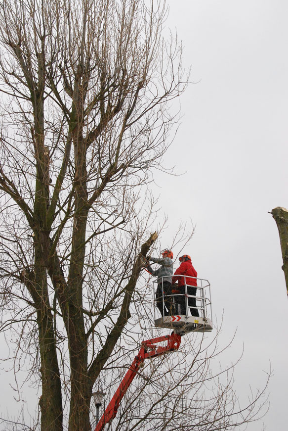 conservation_company_tree_surgery_natural_ponds_east_anglia_029