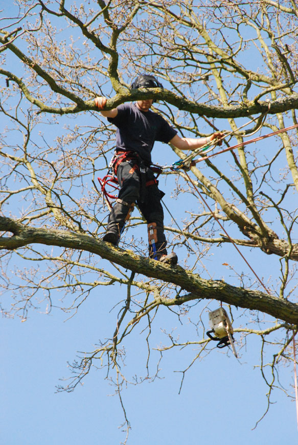 conservation_company_tree_surgery_natural_ponds_east_anglia_042