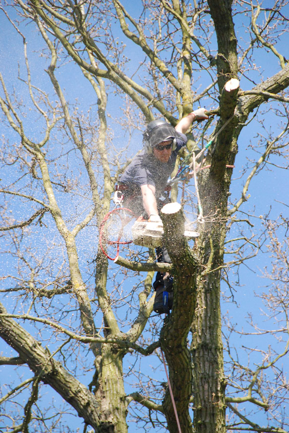 conservation_company_tree_surgery_natural_ponds_east_anglia_047