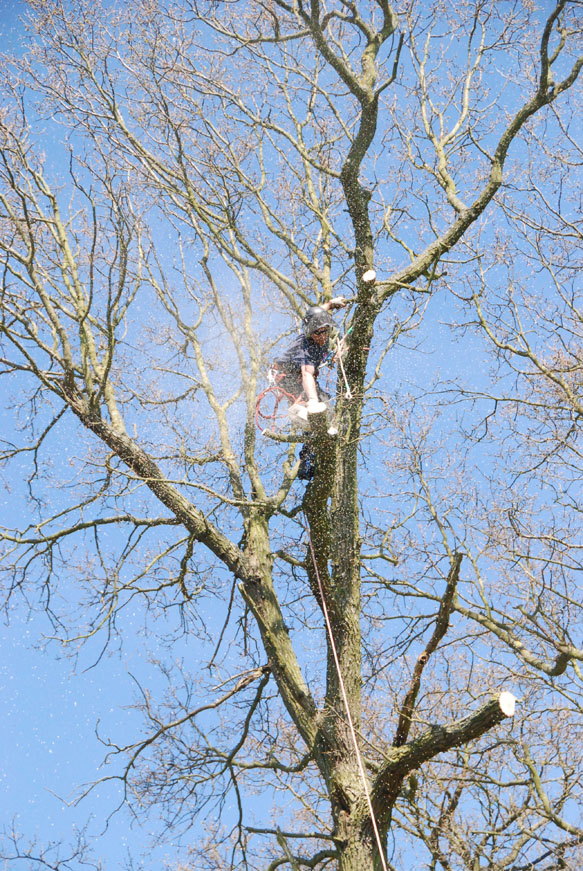 conservation_company_tree_surgery_natural_ponds_east_anglia_050