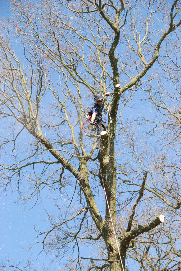 conservation_company_tree_surgery_natural_ponds_east_anglia_051