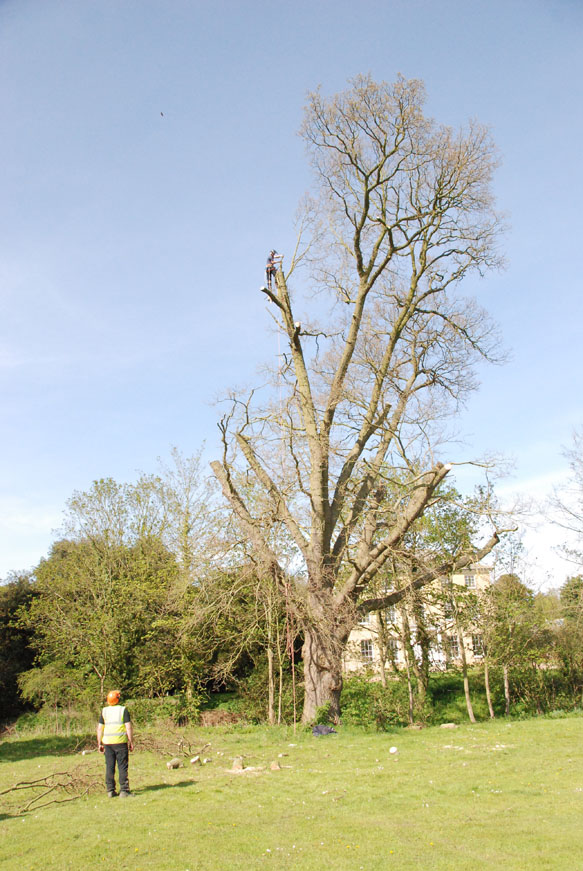 conservation_company_tree_surgery_natural_ponds_east_anglia_053