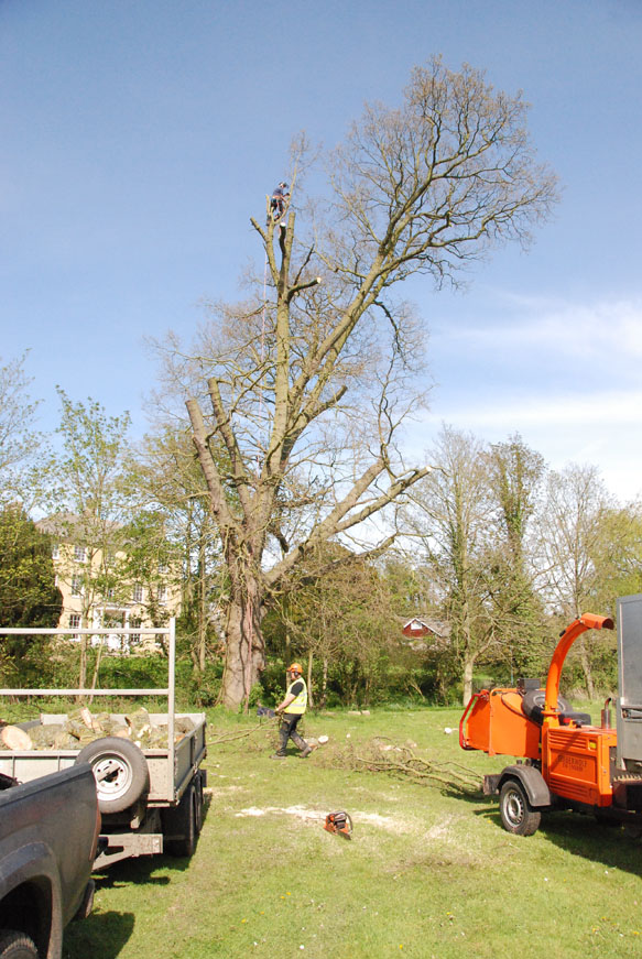 conservation_company_tree_surgery_natural_ponds_east_anglia_055