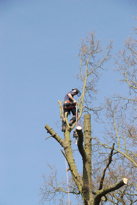 conservation_company_tree_surgery_natural_ponds_east_anglia_057