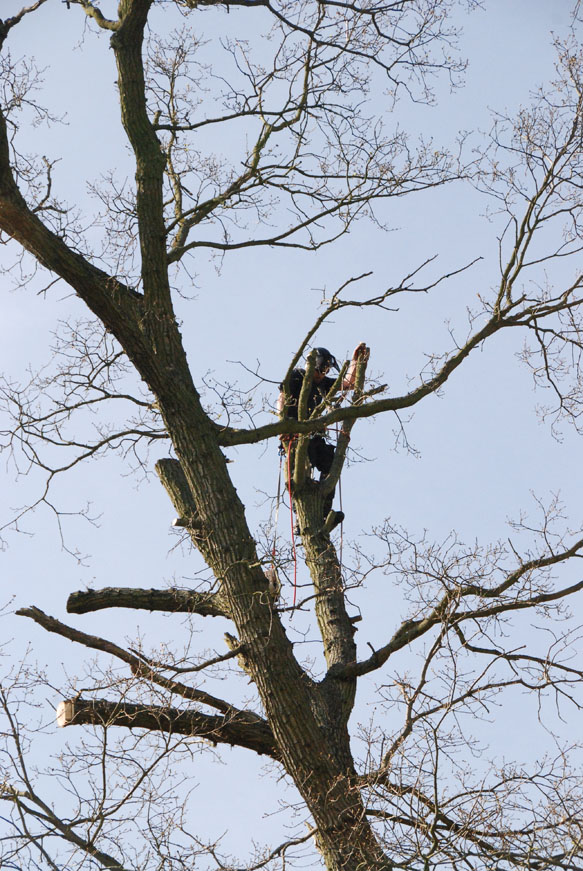 conservation_company_tree_surgery_natural_ponds_east_anglia_061