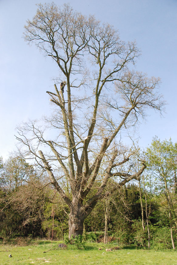 conservation_company_tree_surgery_natural_ponds_east_anglia_062