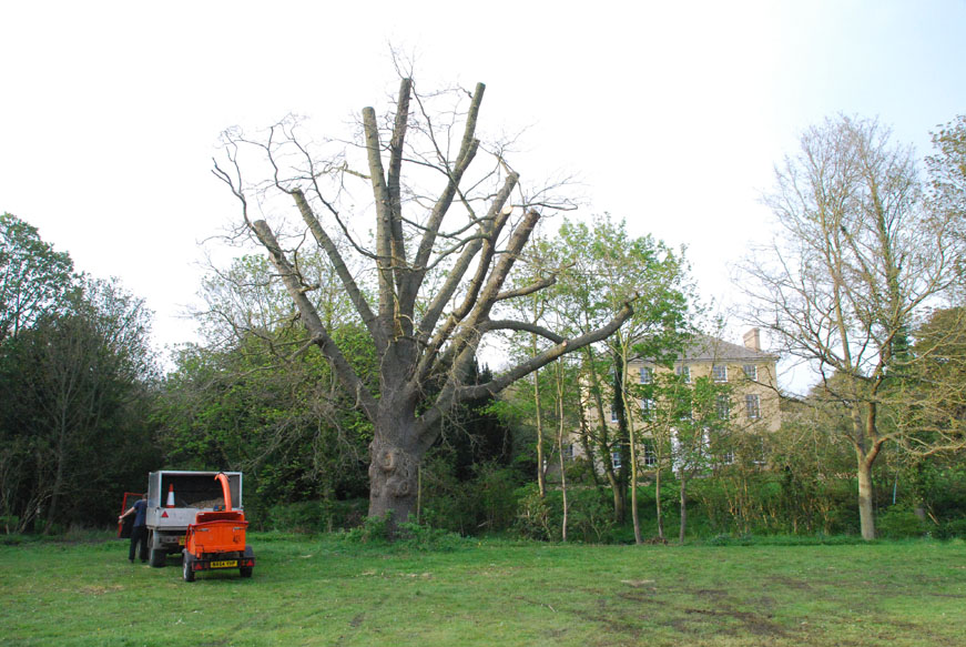 conservation_company_tree_surgery_natural_ponds_east_anglia_064