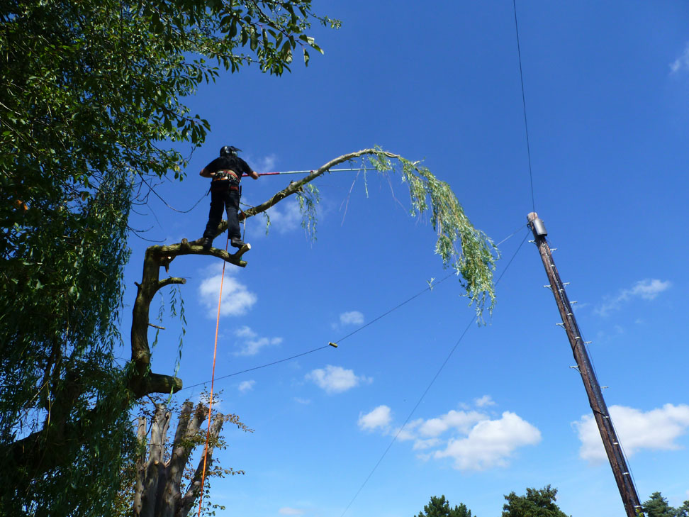 conservation_company_tree_surgery_natural_ponds_east_anglia_074