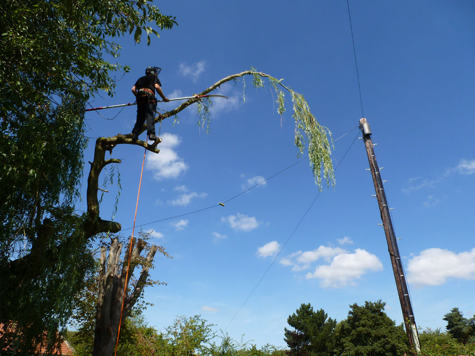conservation_company_tree_surgery_natural_ponds_east_anglia_076