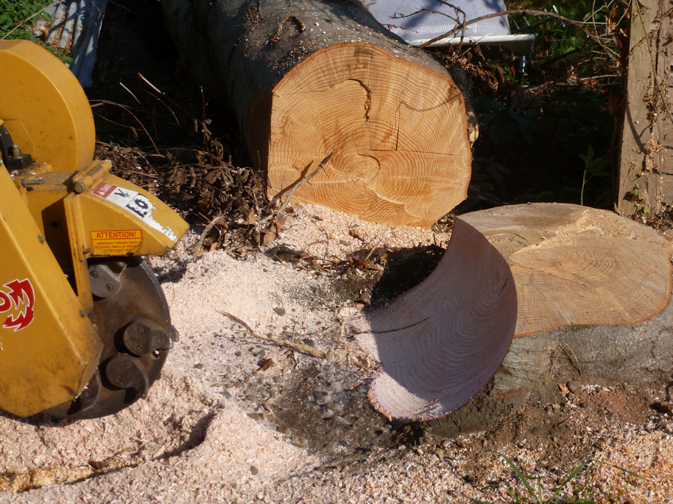 conservation_company_tree_surgery_natural_ponds_east_anglia_077